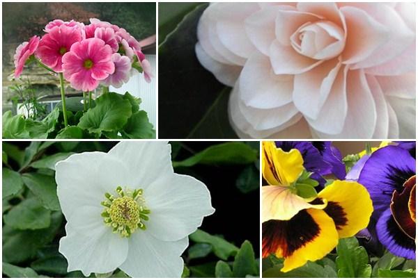Il calendario dei fiori | Tuo logo